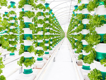 Vertical Farm Rollout Offers Green Shoots For UK Produce Industry