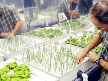 How To Make Your Hydroponics Farm Profitable?