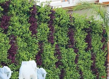 [Sustainability Agenda] How The Living Greens Is Bringing Organic Farming To Urban Spaces