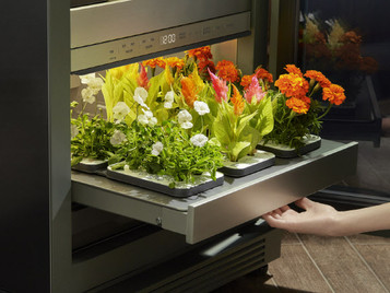 LG Electronics Introduces The Tiiun, A Plant-Growing Appliance