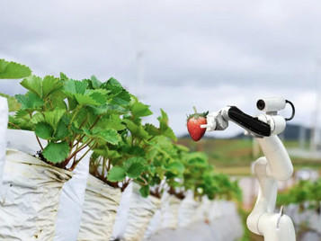 How AI, Smart Sensors, And Lettuce-Picking Robots Are Transforming Agriculture On This 'Hands-Free'