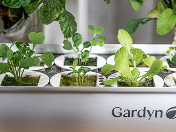 The Rise of At-Home Hydroponic Gardens
