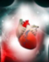 heart.cardiovascular.disease.jpg