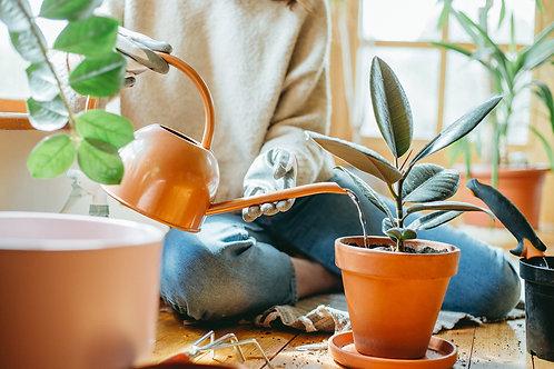 House Plant Tonic