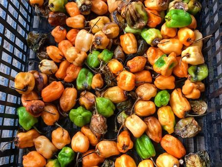 Yucatecan food