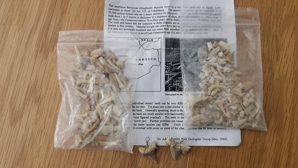 Shark Teeth (including 2 ready bound for jewellery)