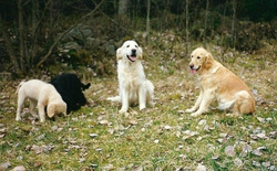 Kajsa, Kurtan, Nicke, Daisy