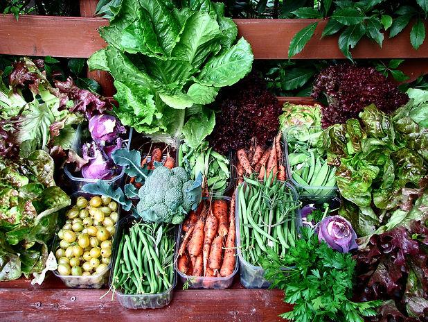 legume_potager_cueillette_carotte_harico