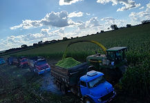 Corn Silage.jpg