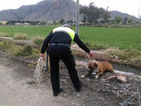 La responsabilidad patrimonial de las Comunidades de Regantes en los supuestos de accidente por caí