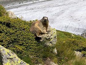Murmeltier Wanderung Bernina