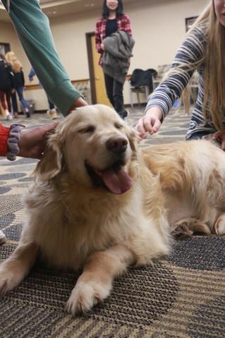Service Dogs Visit