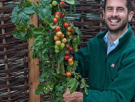 Futuristic Food Trends - Tomato, Potato