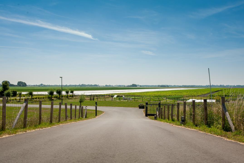 Asperges in de polder