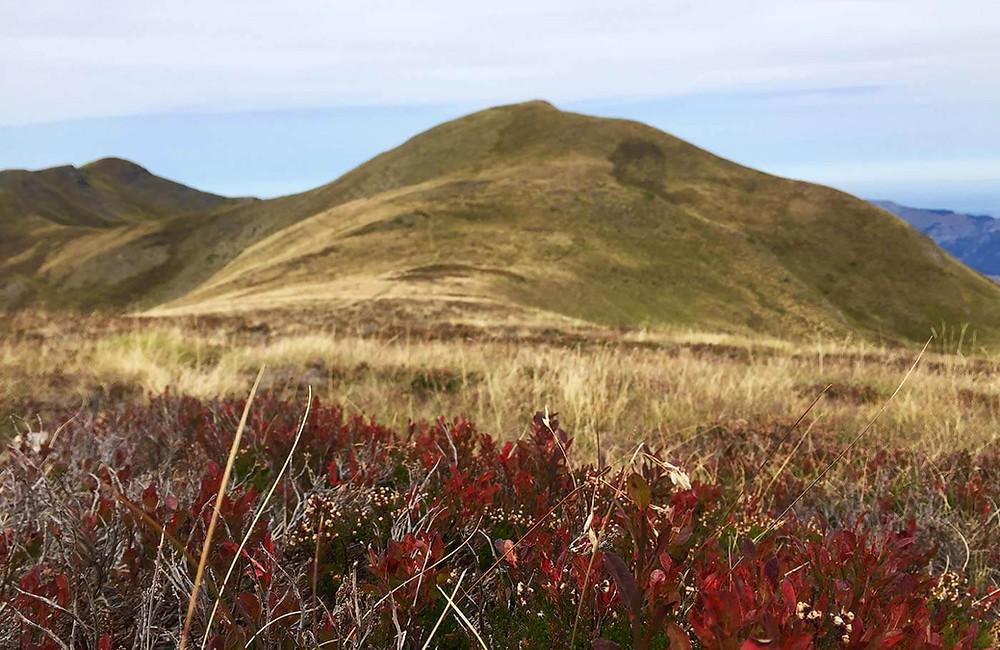 Hügelige Berglandschaft mit trockenem Gras und roten Blaubeersträuchern im Vordergrung.