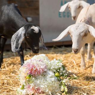 Wooly Bridesmaids