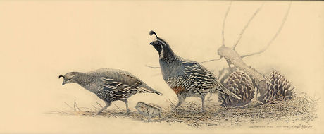 California Quail Family.jpg