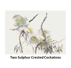 Two Sulphur Crested Cockatoos.png
