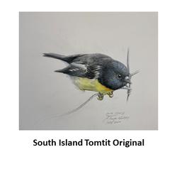 South Island Tomtit Original