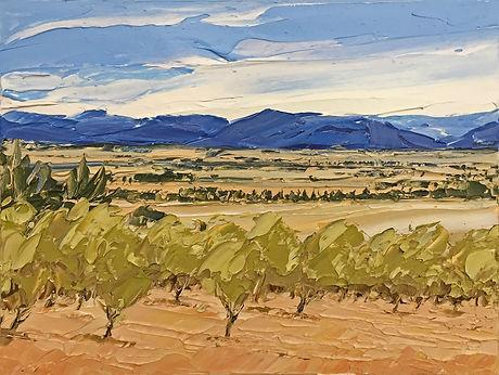 Olive Trees, Martinborough.jpg
