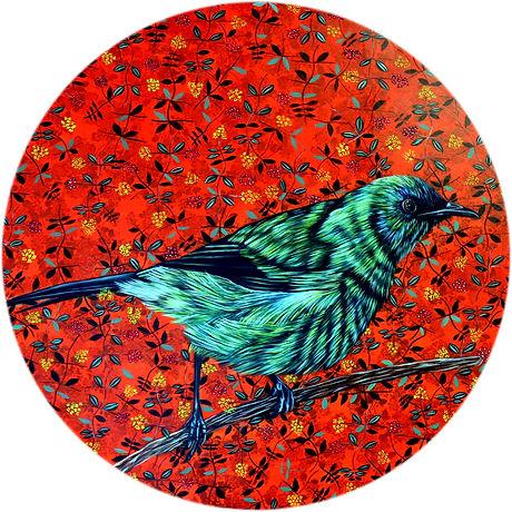 NZ-Bellbird-Korimako-1.jpg