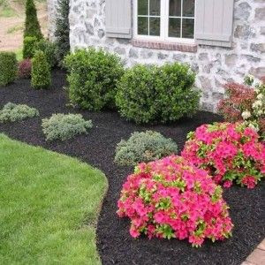 Selecting the right plants in Spring