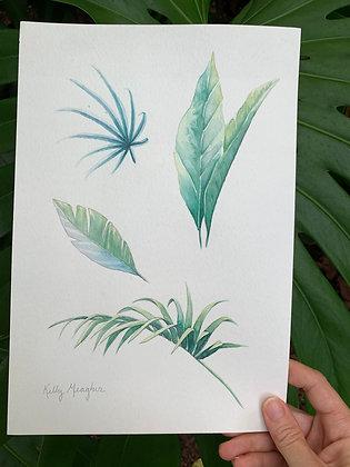 Tropical Botanicals 2