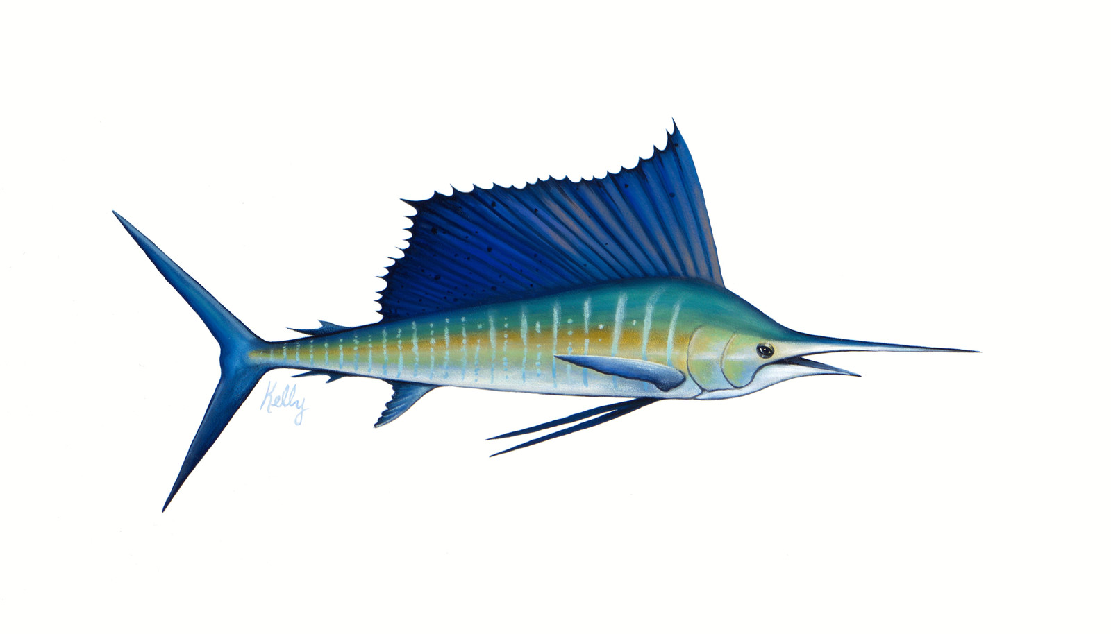 Sailfish | The art of Kelly Meagher