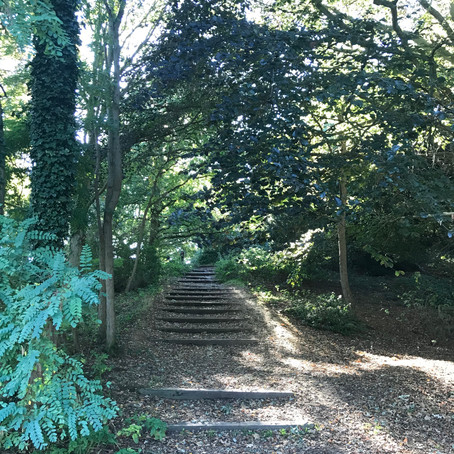TAKE A WALK WITH ME THROUGH: LANGDON HILLS COUNTRY PARK