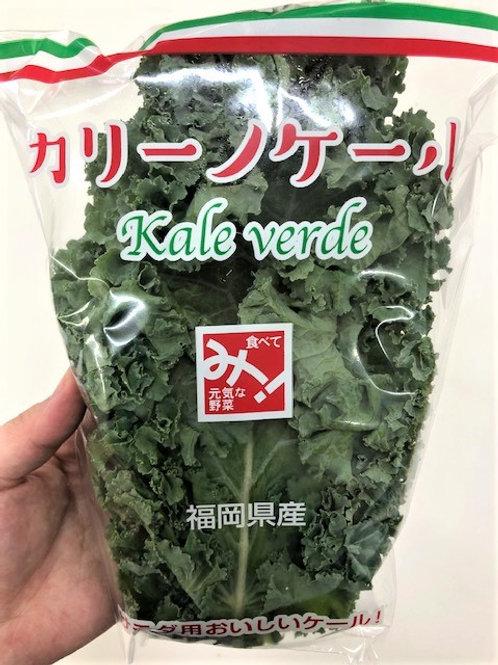 【福岡産】カリーノケール 5パック