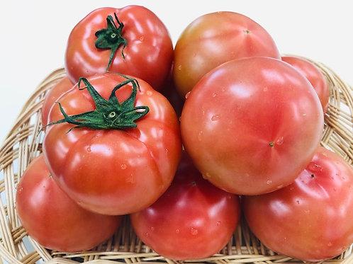 【熊本産】糖度6度以上 桃太郎プレミアムトマト 1ケース(24玉) 約4kg