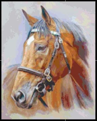 Elegant Horse