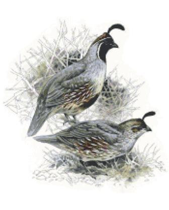 Gamble Quails Cross Stitch Chart