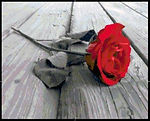 One Rose Cross Stitch Pattern