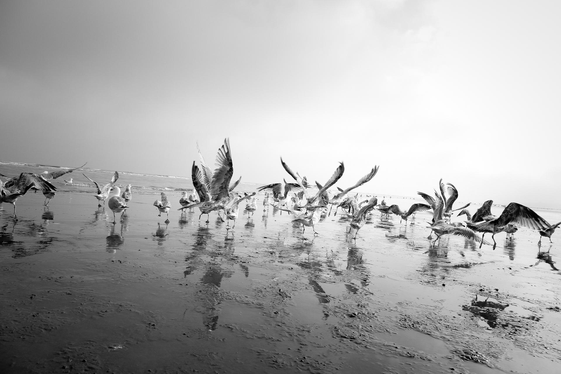 Seagulls enjoying the fishing