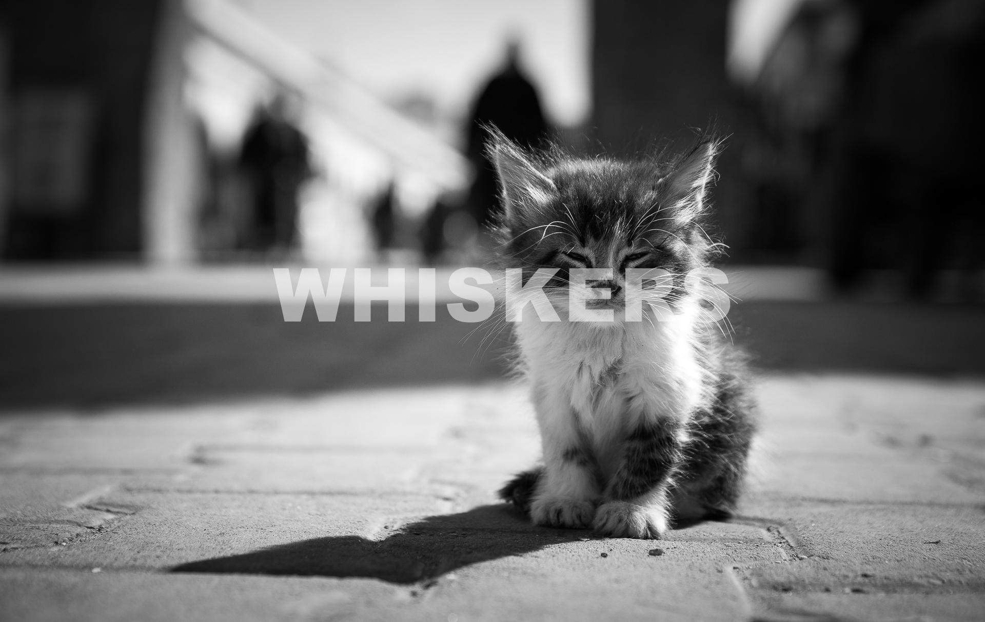 whiskers.jpg