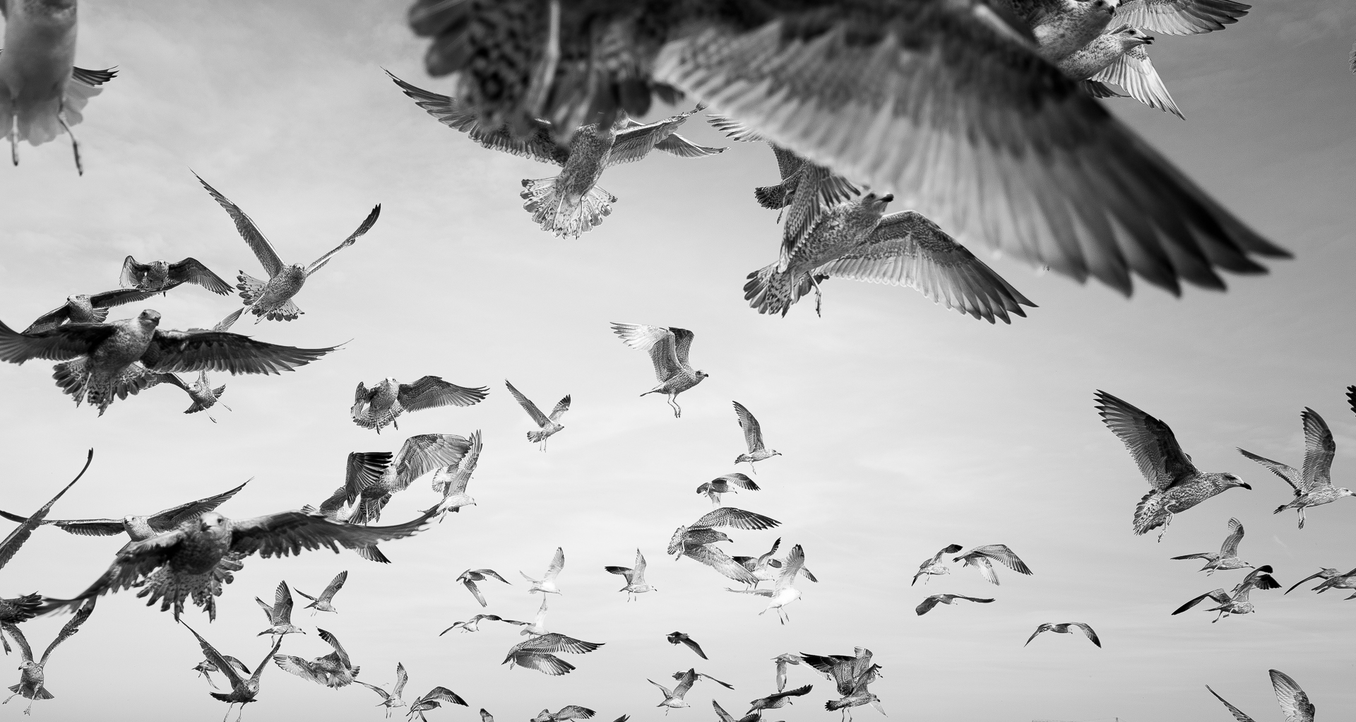 A sky full of enthousiastic seagulls