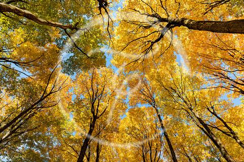 Trees in Aurora