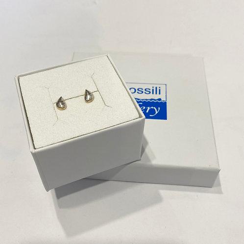 Silver Mussel Shell Earrings