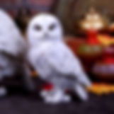 Owl Ornaments and Figurines