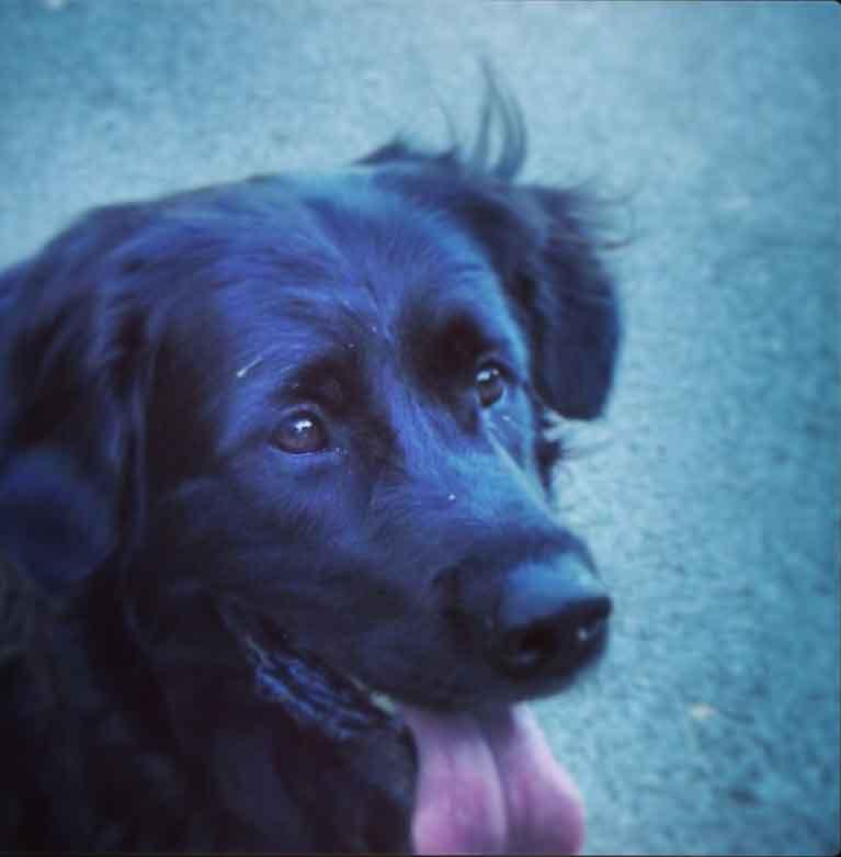 Will's service dog