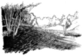 IMG_7504 2.jpg