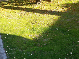 Fairy Rings and Other Things