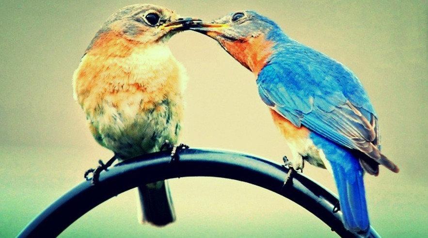feeding the blue