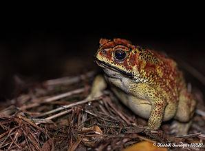 Amphibian.jpg
