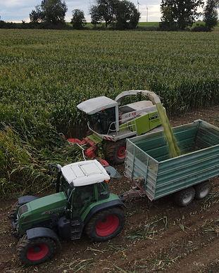Mais häckseln Lohnunternehmen Maget