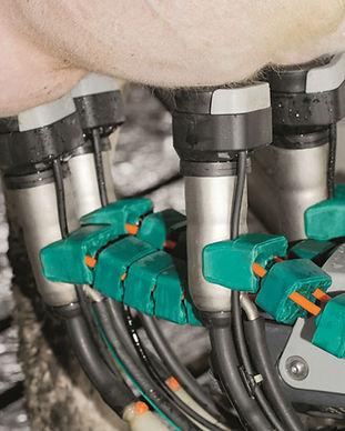 milking robot.jpg