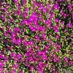 LD_Snaps_C_S_Flower