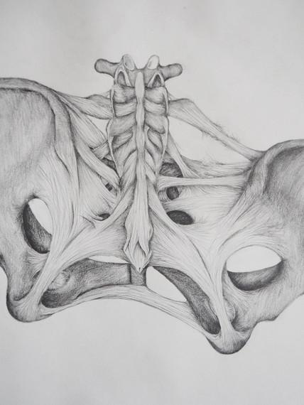 distorted pelvis.jpg
