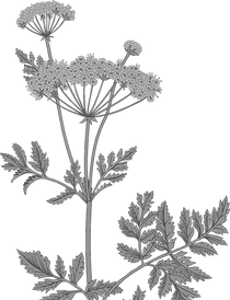 Botany_edited_edited.png